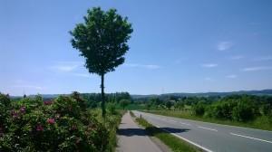 bike path = skate safe